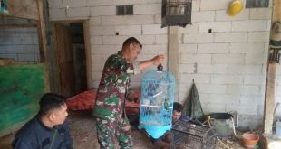 Tentara Ini Bagikan Ilmu Beternak Lovebird Kepada Warga Sasaran TMMD