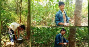 Dilema Petani Karet, di Desa Surakarta Kecamatan Abung Timur