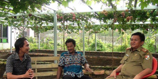Budidaya Anggur Usaha yang Menjanjikan Kadis Lingkungan Hidup Apresiasi Kurniawan