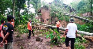 Sejumlah rumah di Desa Peraduan Waras Diterpa Pohon Tumbang